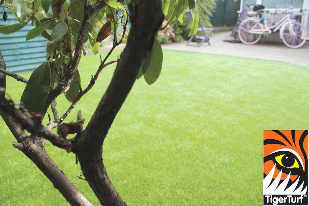 Garden Lawn Transformation