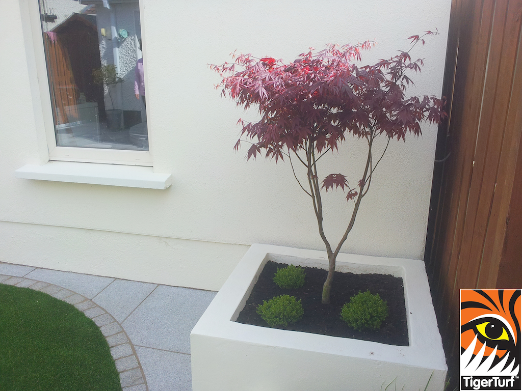 maple tree with synthetic lawn