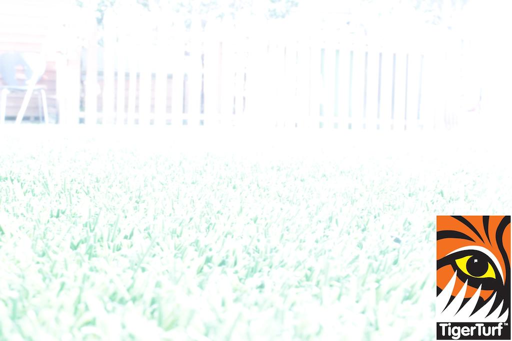 synthetic grass in family garden 48.jpg