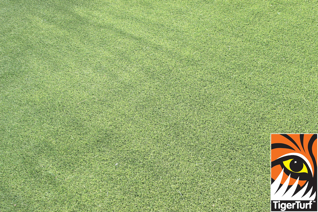 synthetic grass in family garden 68.jpg