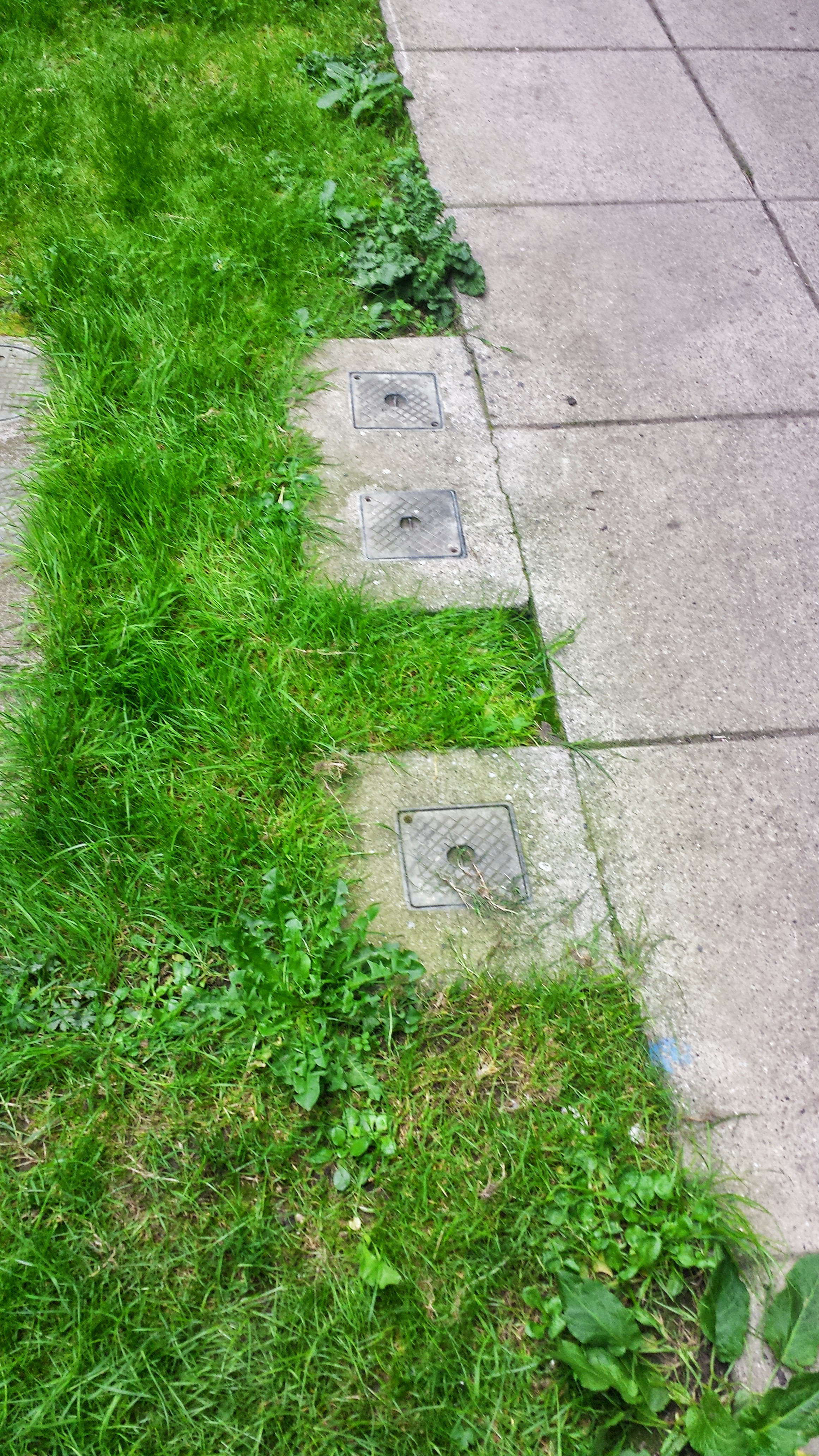 concrete path and old grass