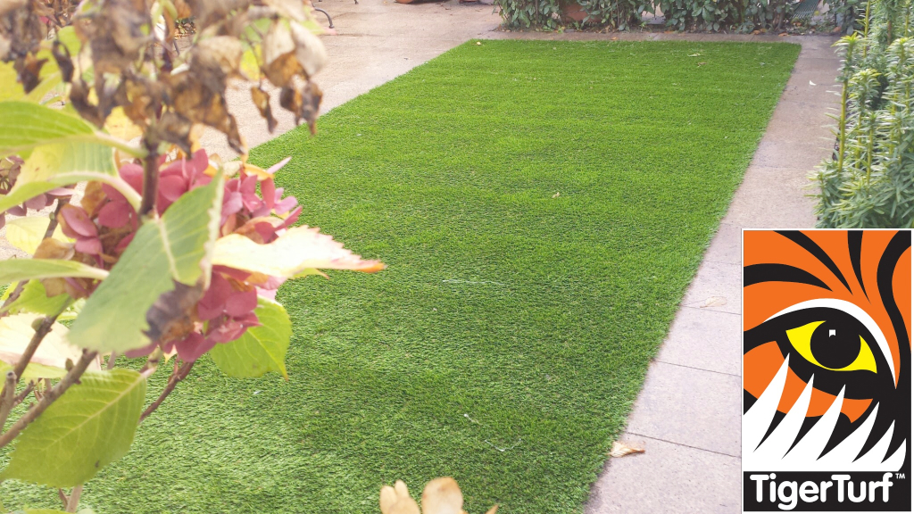Synthetic grass in front lawn 23.jpg