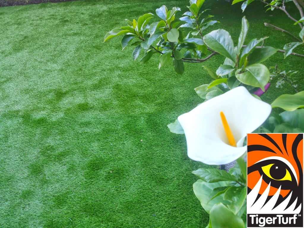 Synthetic grass in front lawn 12.jpg