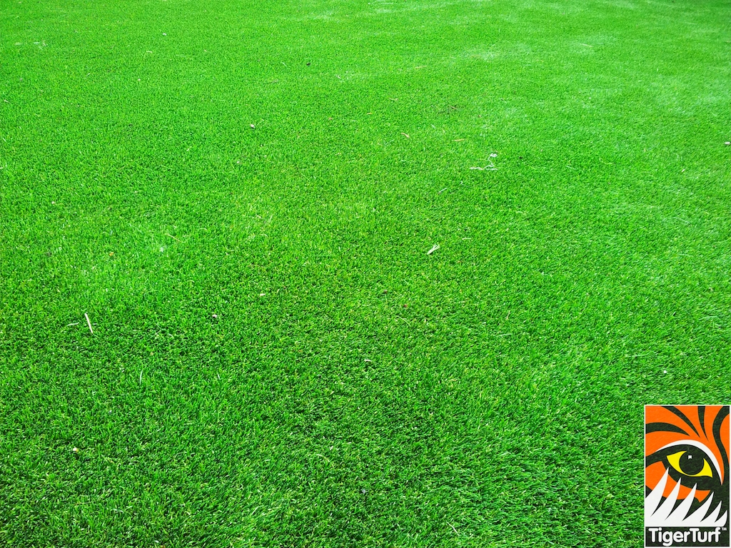 decking and lawn turf 648.jpg