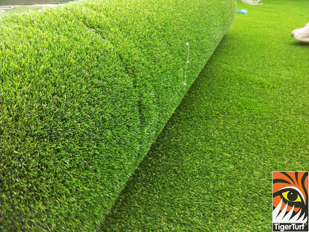 tigerturf lawn turf 795.jpg