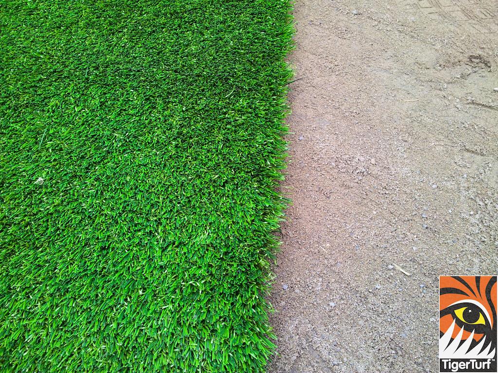 edge of lawn turf