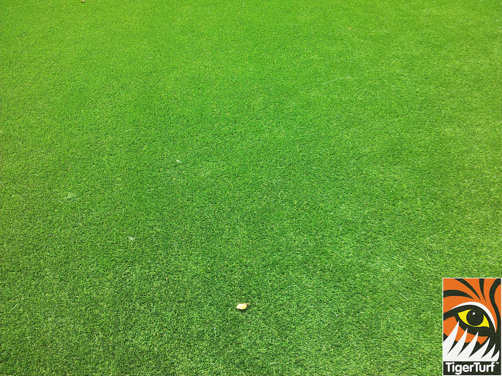 close up of fake synthetic grass