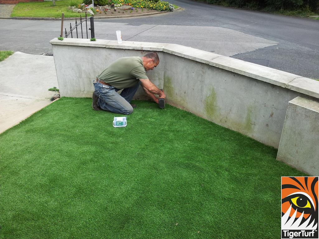 tigerturf lawn turf 818.jpg