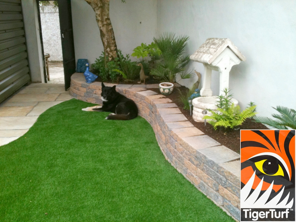 artificial grass and dog