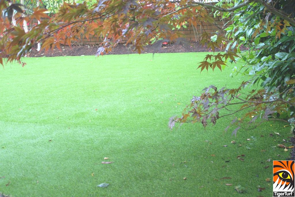 TigerTurf front Lawn