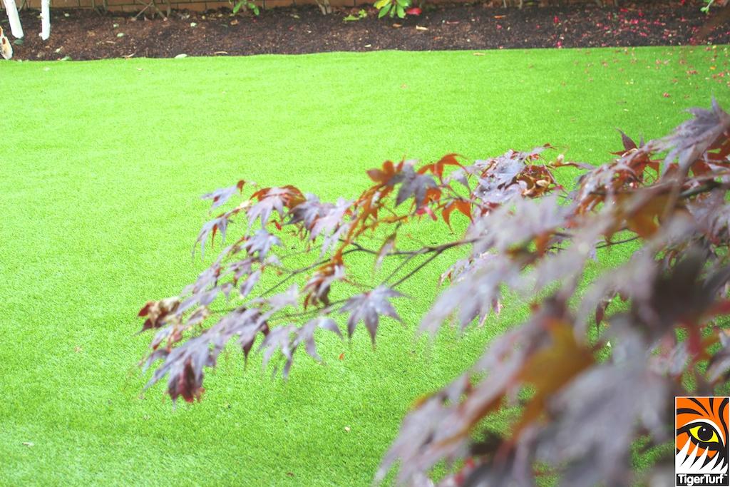 TigerTurf Front garden