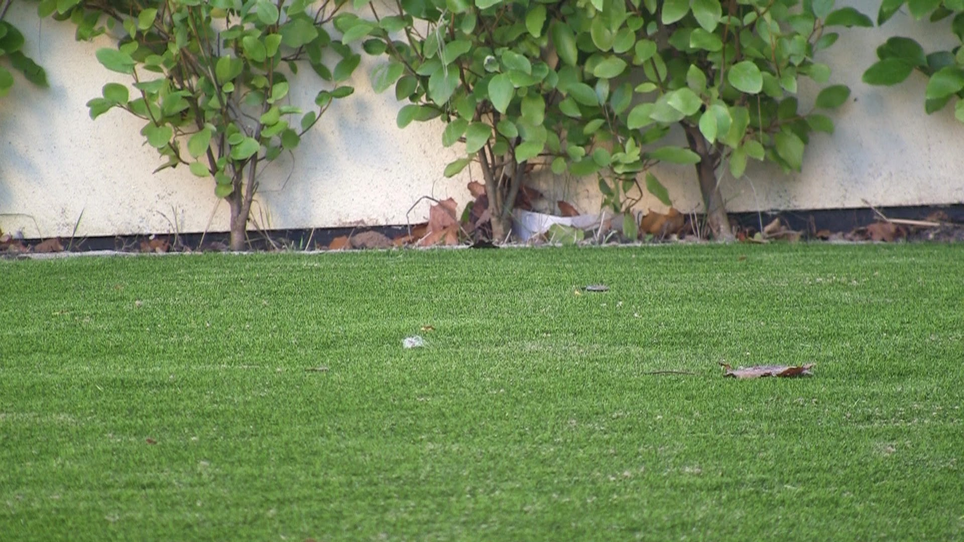 Synthetic Lawn turf