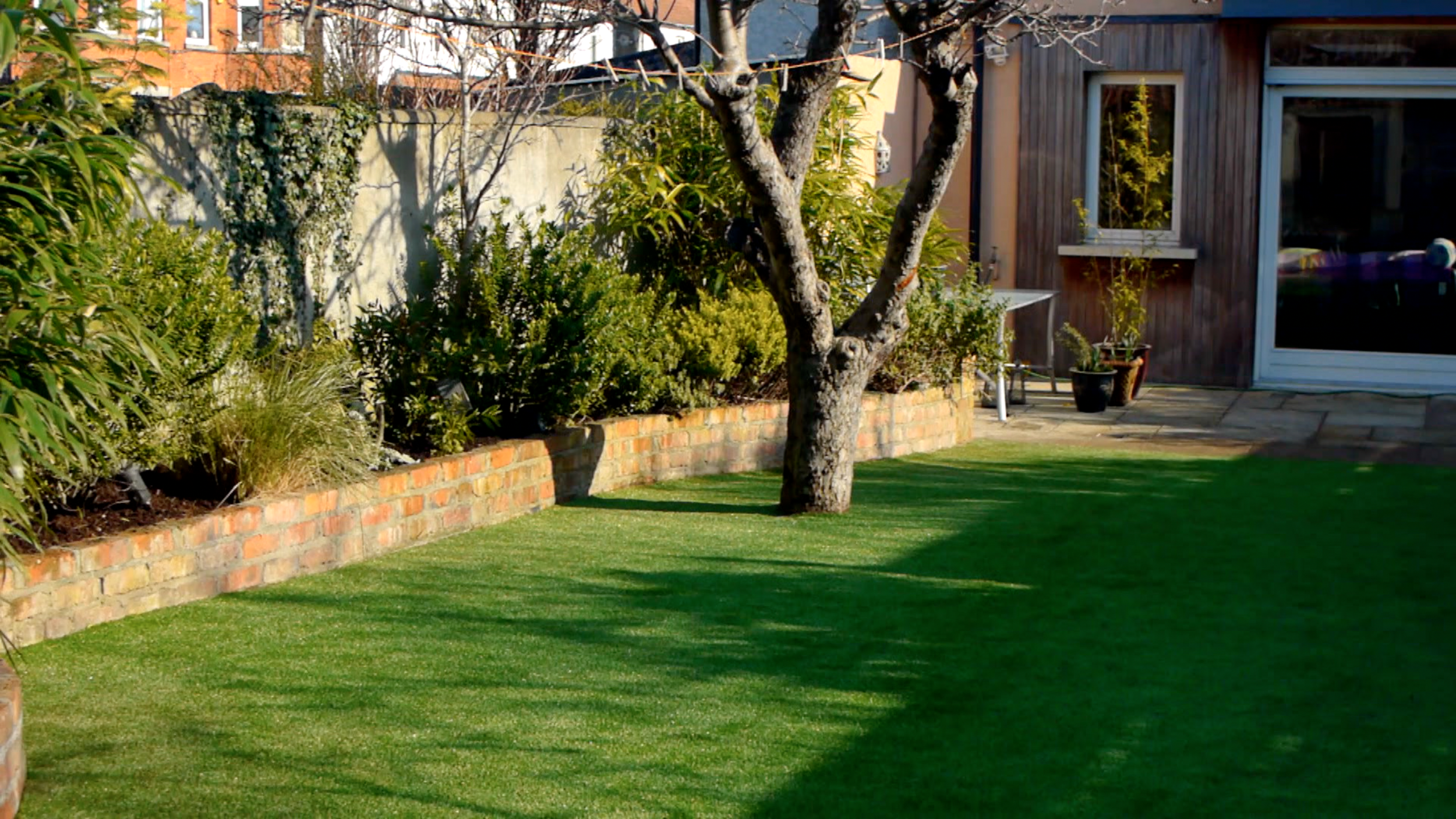 old apple tree and artificial lawn