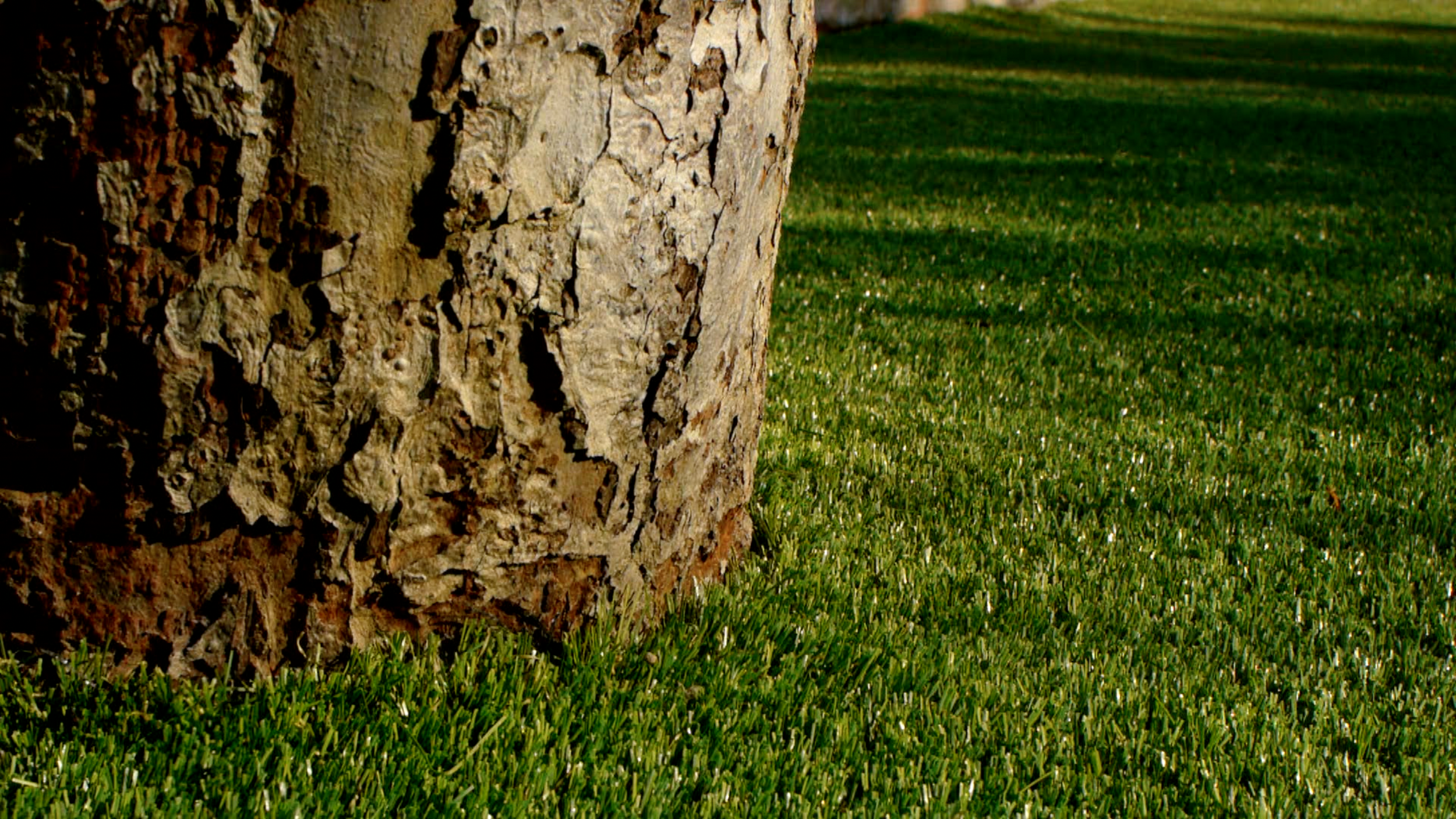 close up of tree and lawn