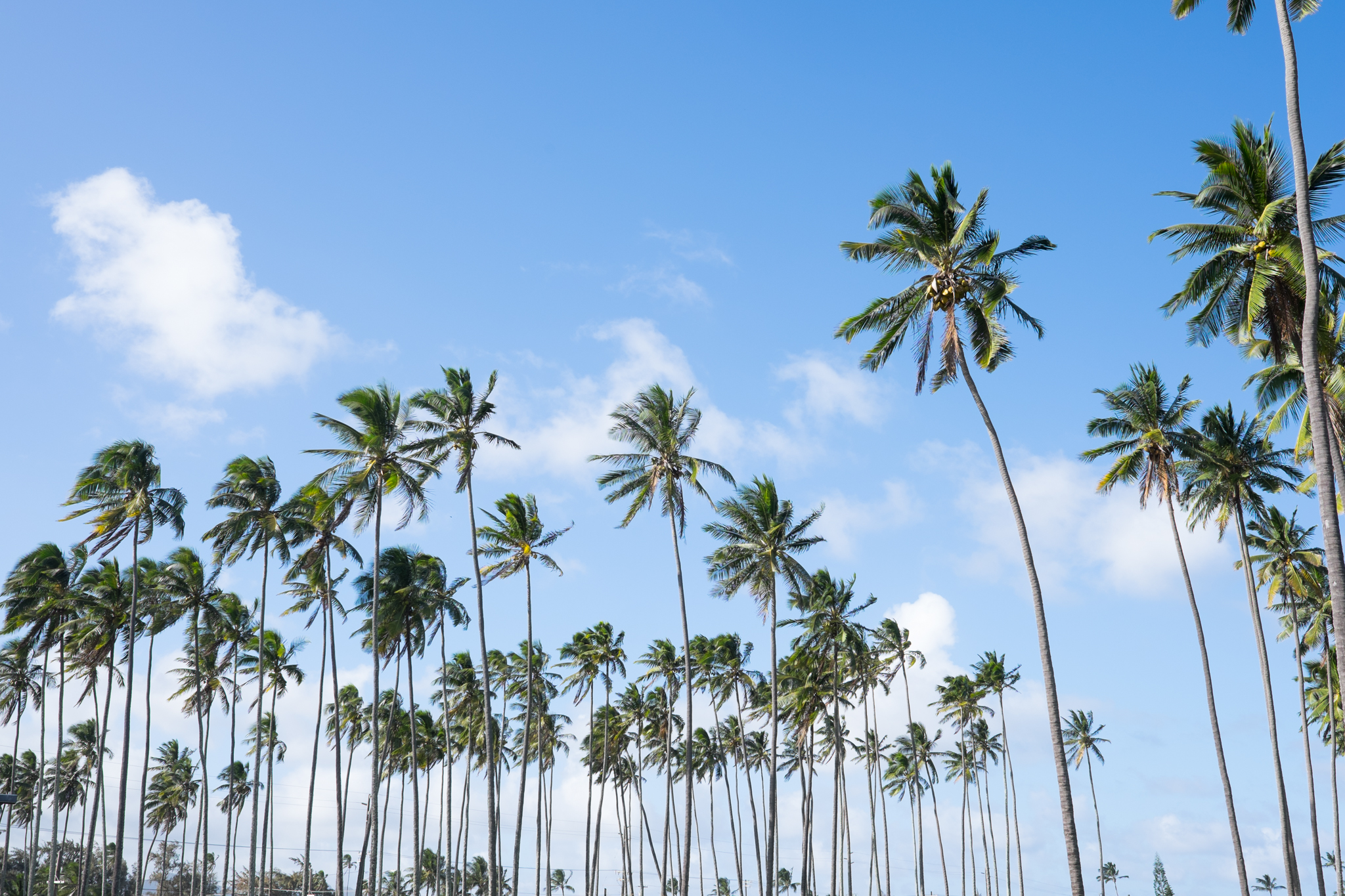 Kauai-73 - Copy.jpg
