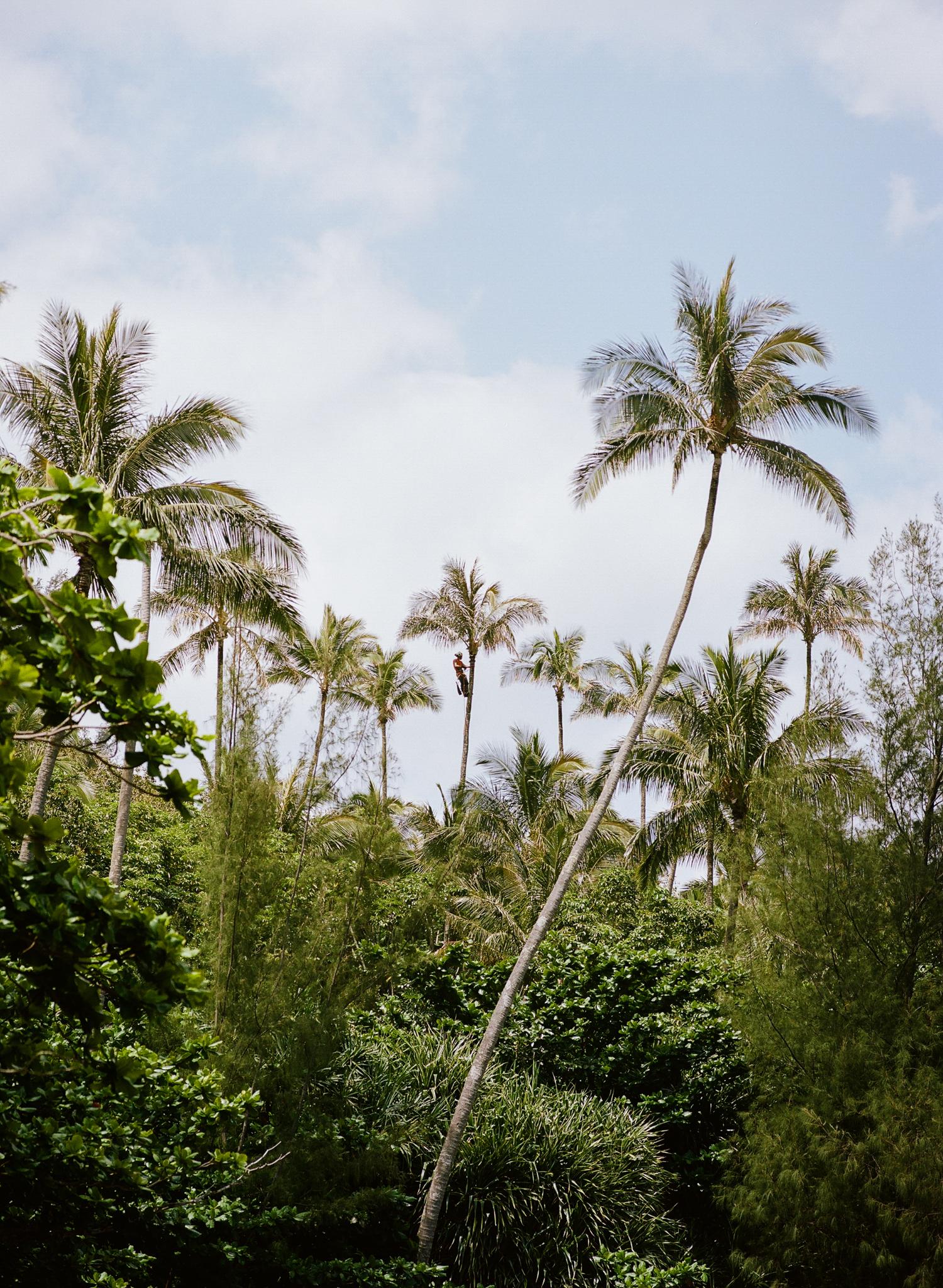 Kauai-210a - Copy.jpg