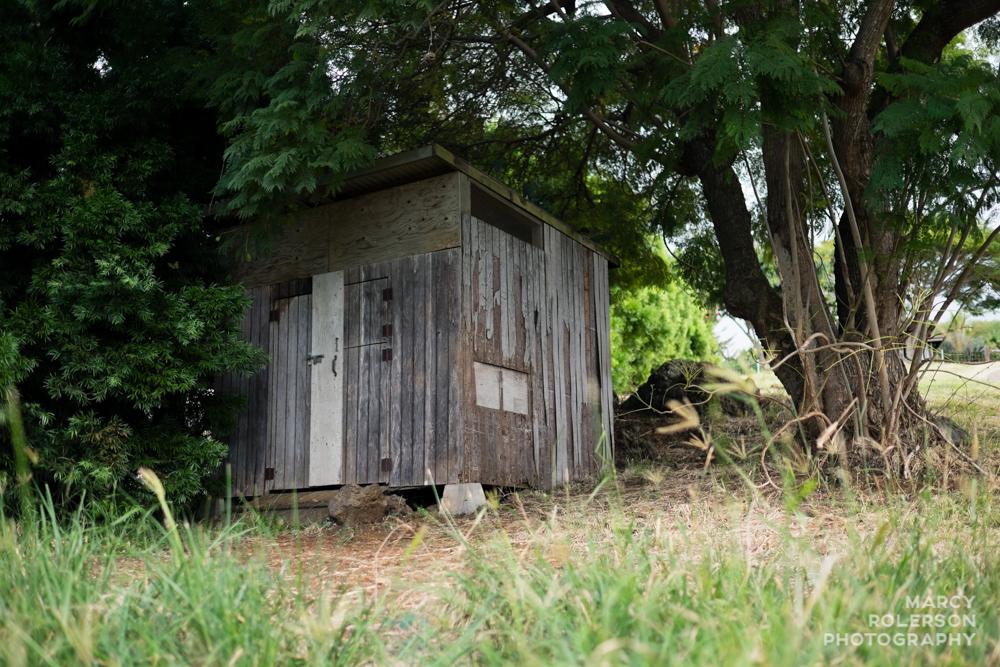 Malolo_Protea_Maui-61.jpg