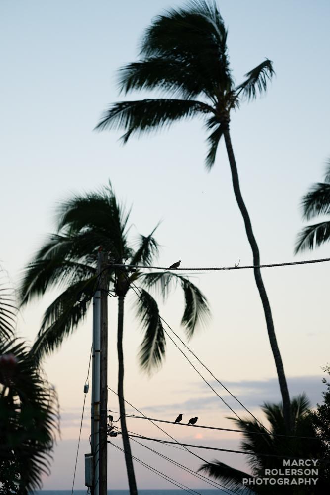 Hawaii_Maui_Paia-12.jpg