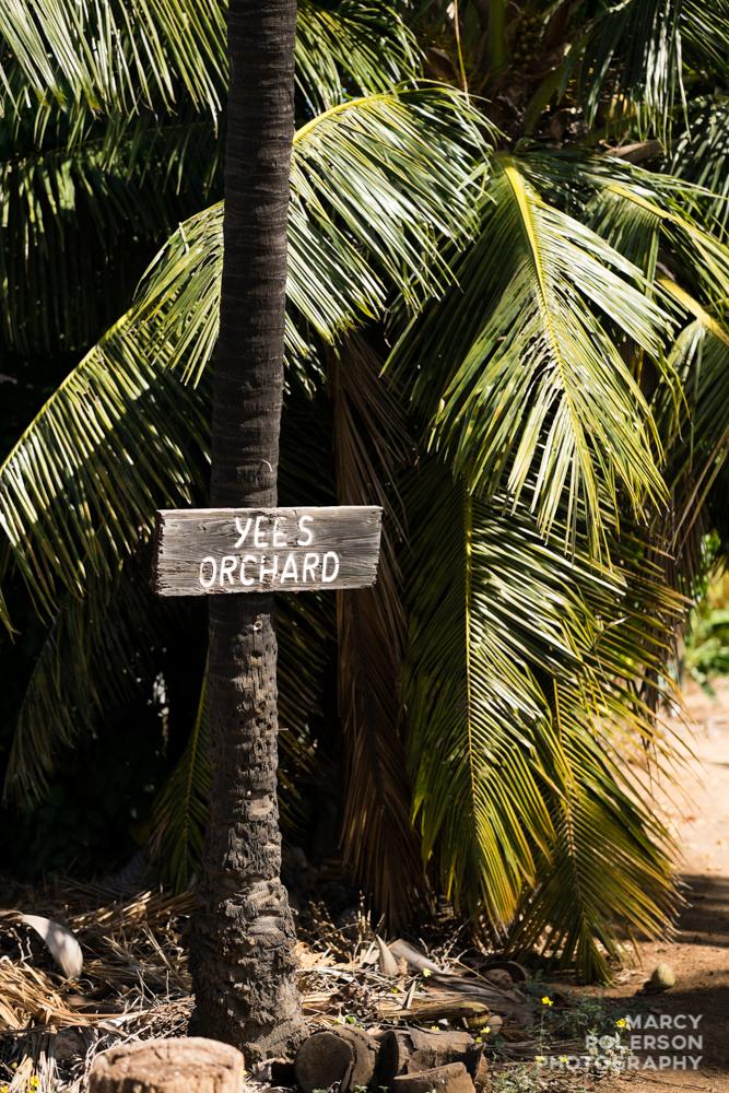 Hawaii_Maui_Paia-46.jpg