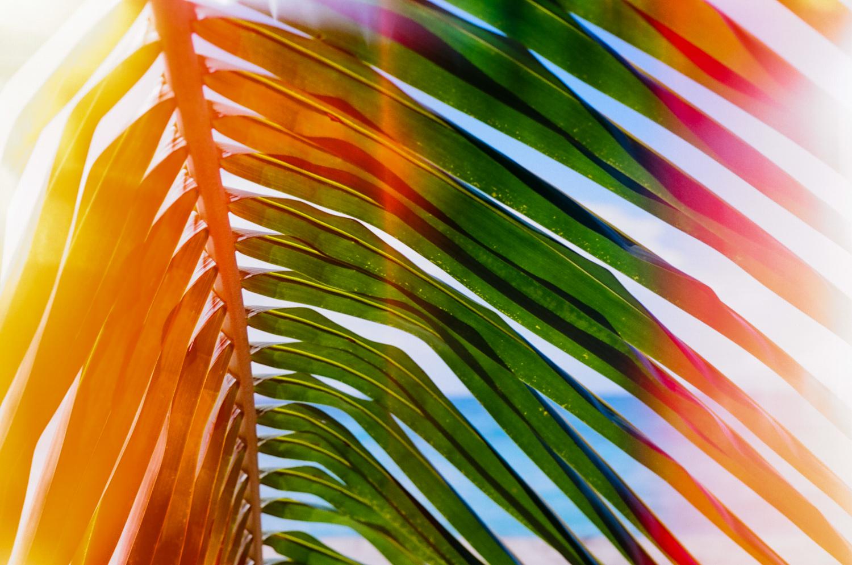 Travel_Vieques_Puerto_Rico-23.jpg