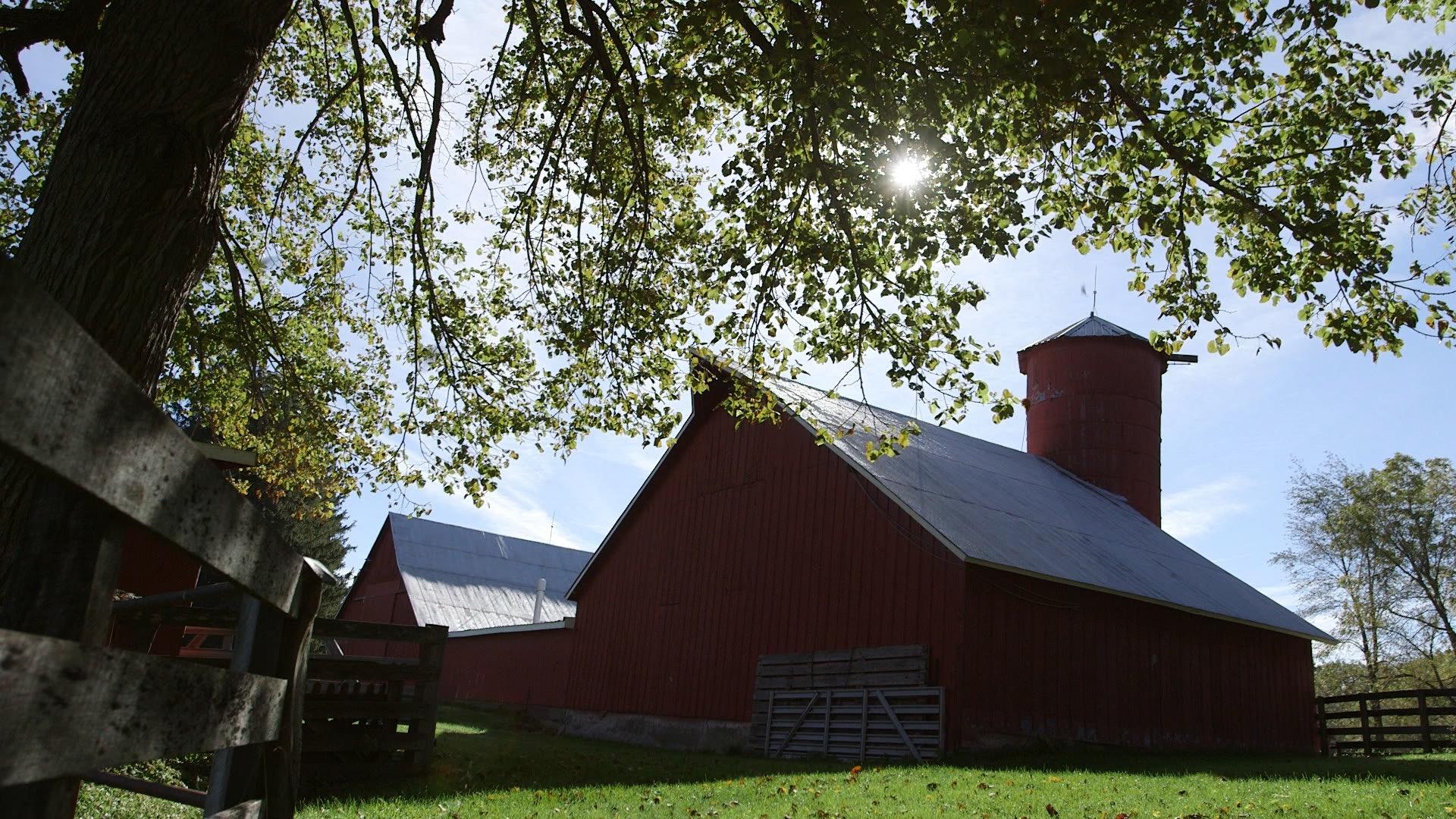 Barns from behind.jpg