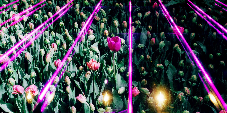 FlowerBannerLR.jpg