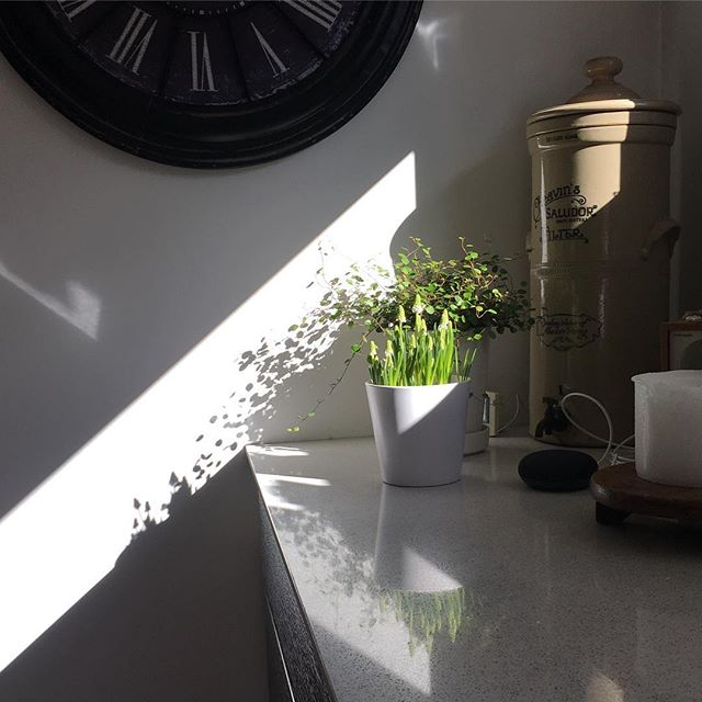 Spring Light 🌿 White Magic . . . #daylight #seaonal #nordic #JOY 🌿 #muscari #white #macic 🌿 #spring #interior #flowering  #vsco ...#inmykitchen 🌿🌿