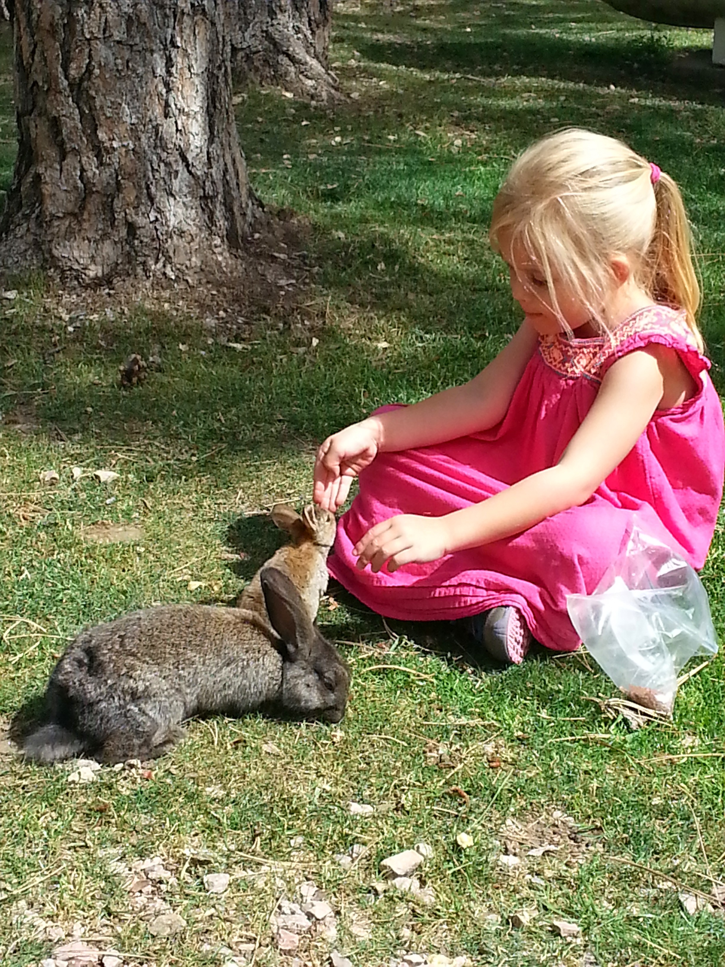 There are tens of tame rabbits at Beaver Lake.
