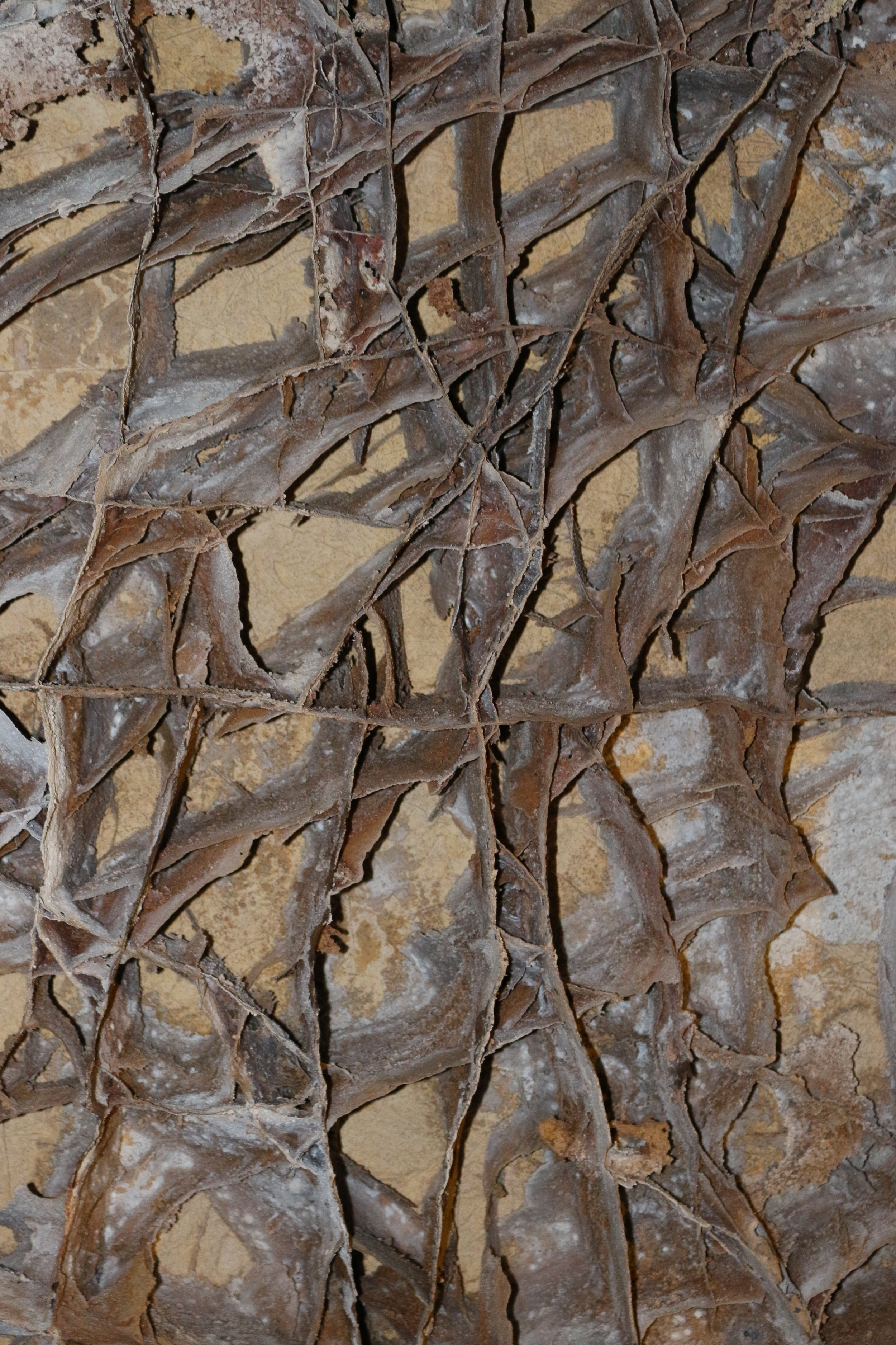 Boxwork - a rare cave formation - Wind Cave NP, SD.