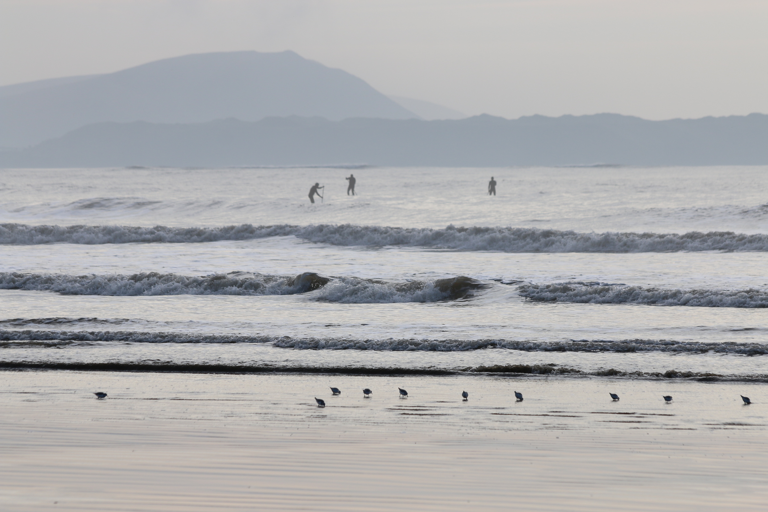 Stand-up-paddleboarders and sandpipers: Cefn Sidan.