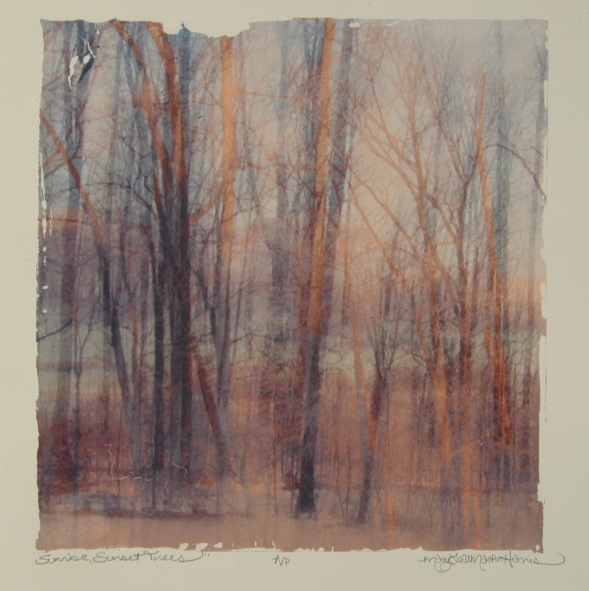 """Sunrise, Sunset Trees , MaryLea Harris    Emulsion Transfer A/P, 2006 12 """" x 12"""" (Private Collection)"""