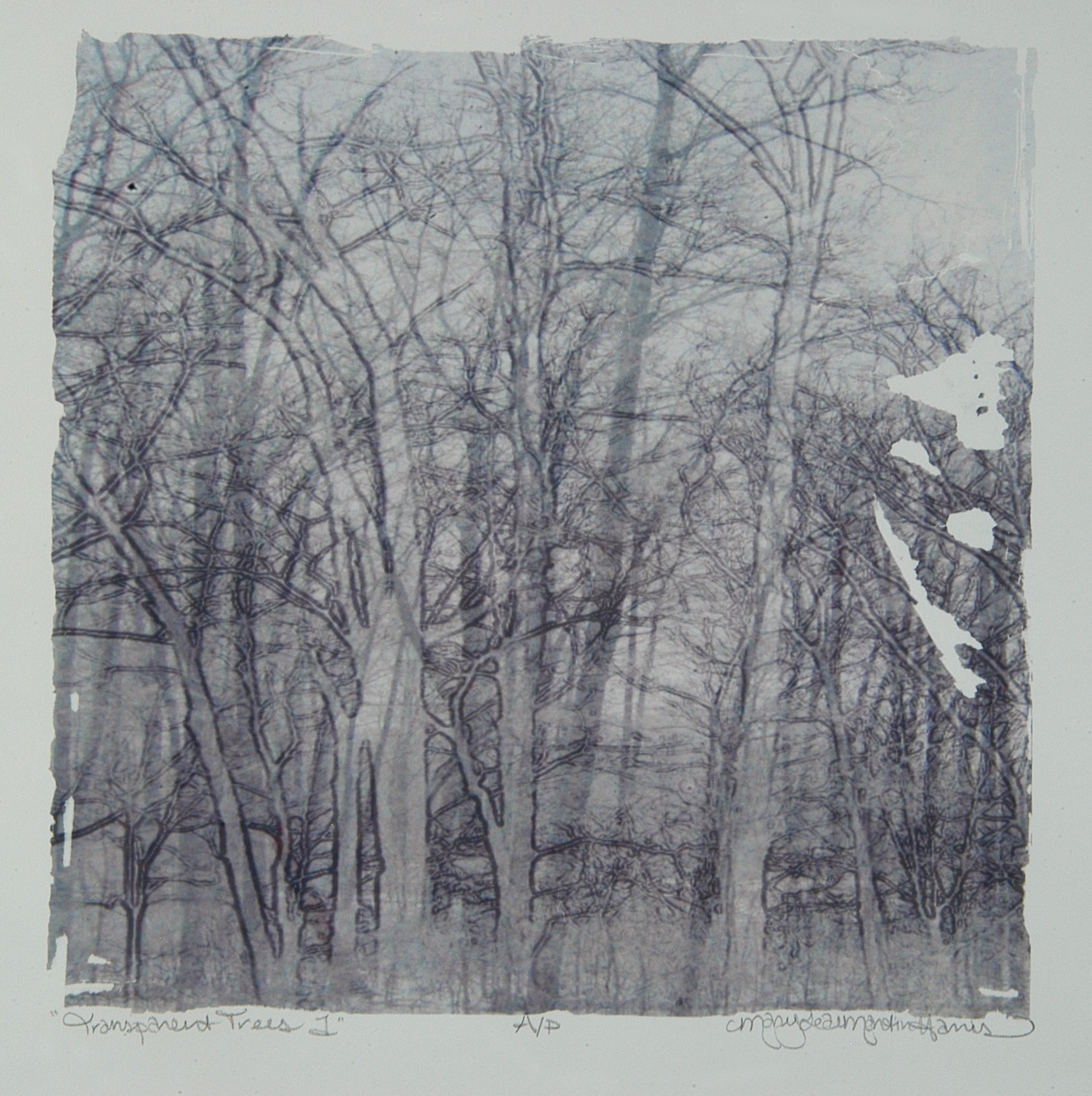 """Transparent Trees 1, MaryLea Harris    Emulsion Transfer A/P, 2006 12 """" x 12"""" (Private Collection)"""