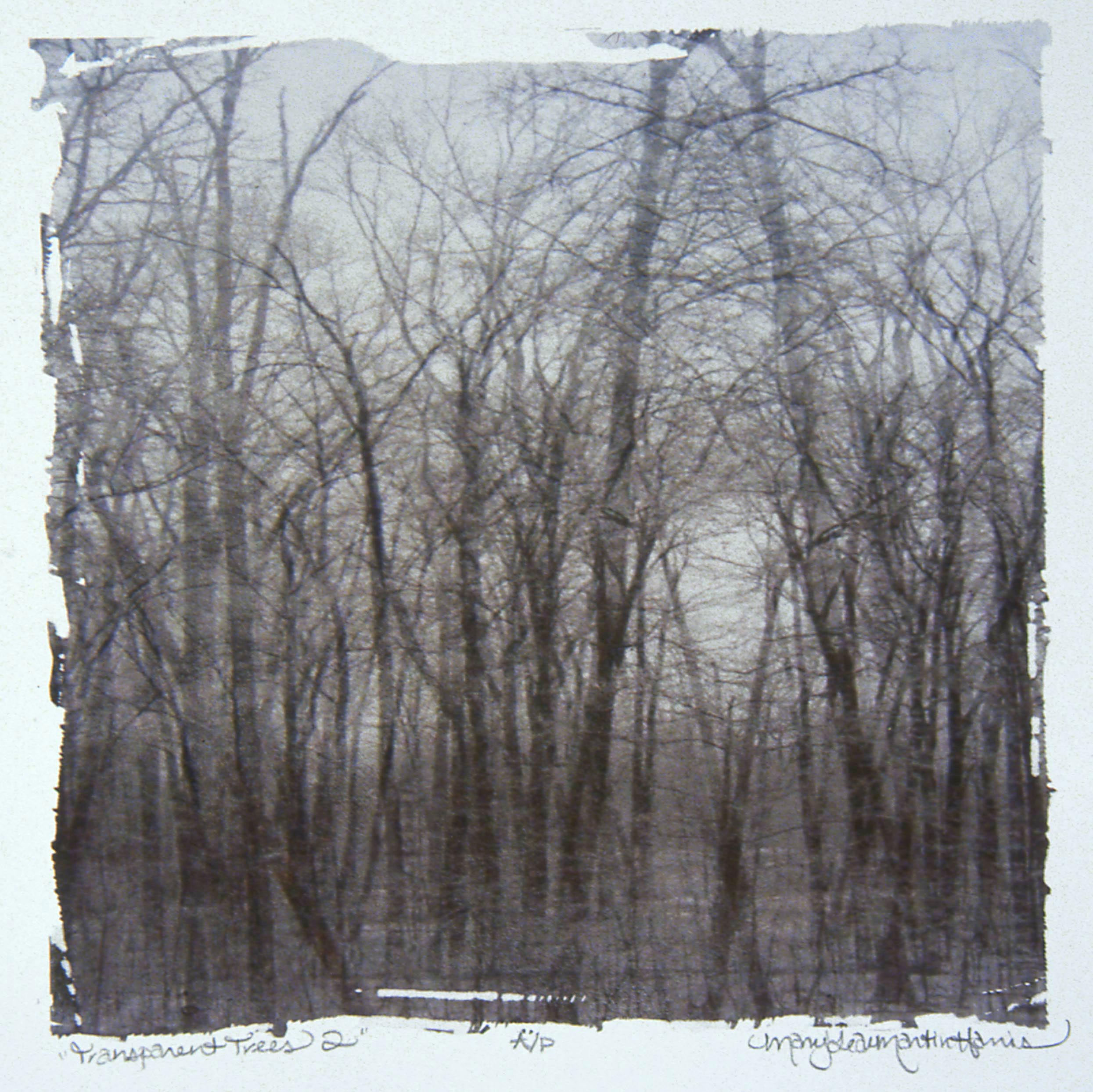 """Transparent Trees 2 , MaryLea Harris    Emulsion Transfer A/P, 2006 12 """" x 12"""" (Private Collection)"""