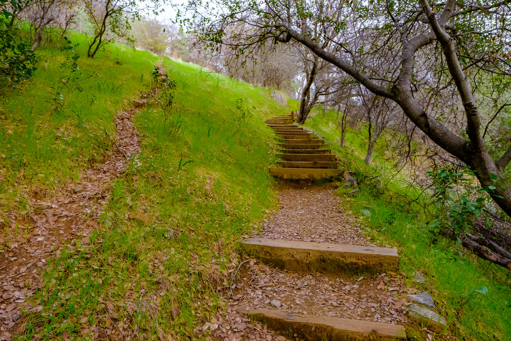One of my favorite parts of the trail is this set of stairs that take you to the main trail.