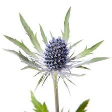 Thistle     Colors:  Blue, green   Care:  Cut and preservative