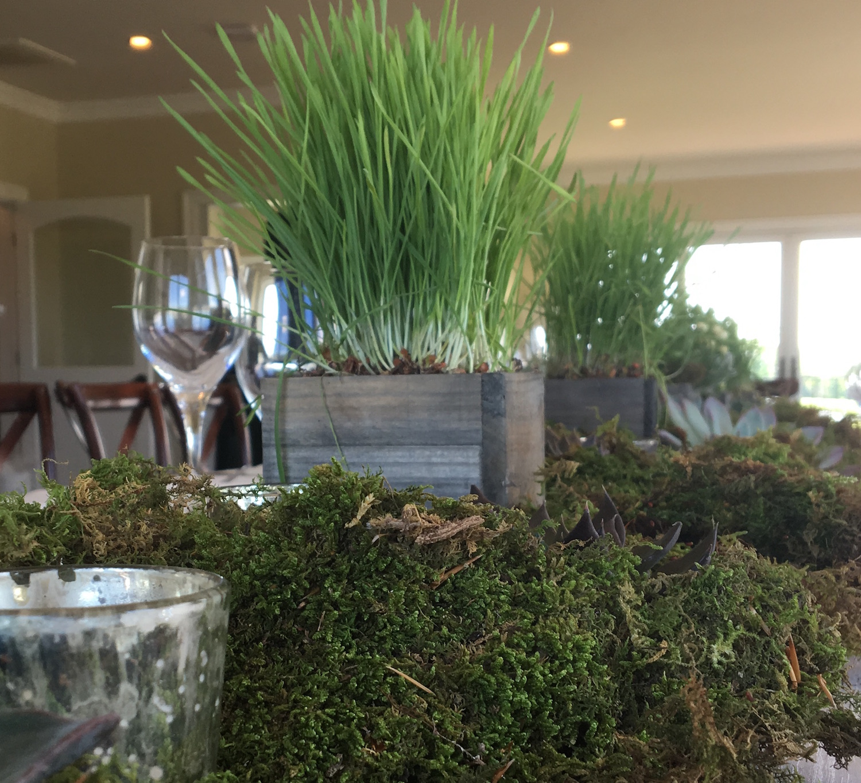 Succulent-Grasses.jpeg