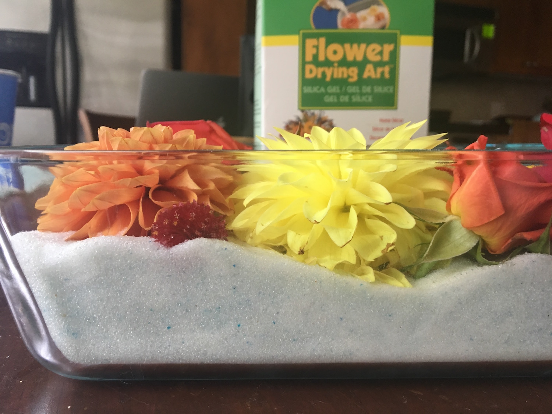 Susies-flowers-2inch-stem.jpg