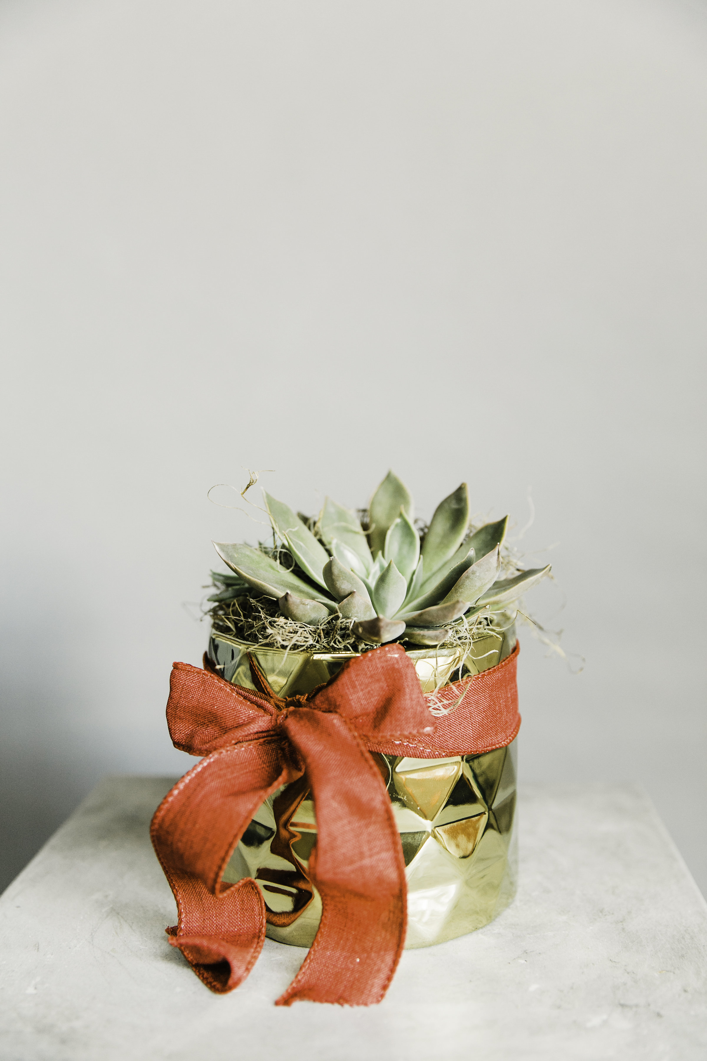 Holiday-Succulent-Bow.jpg