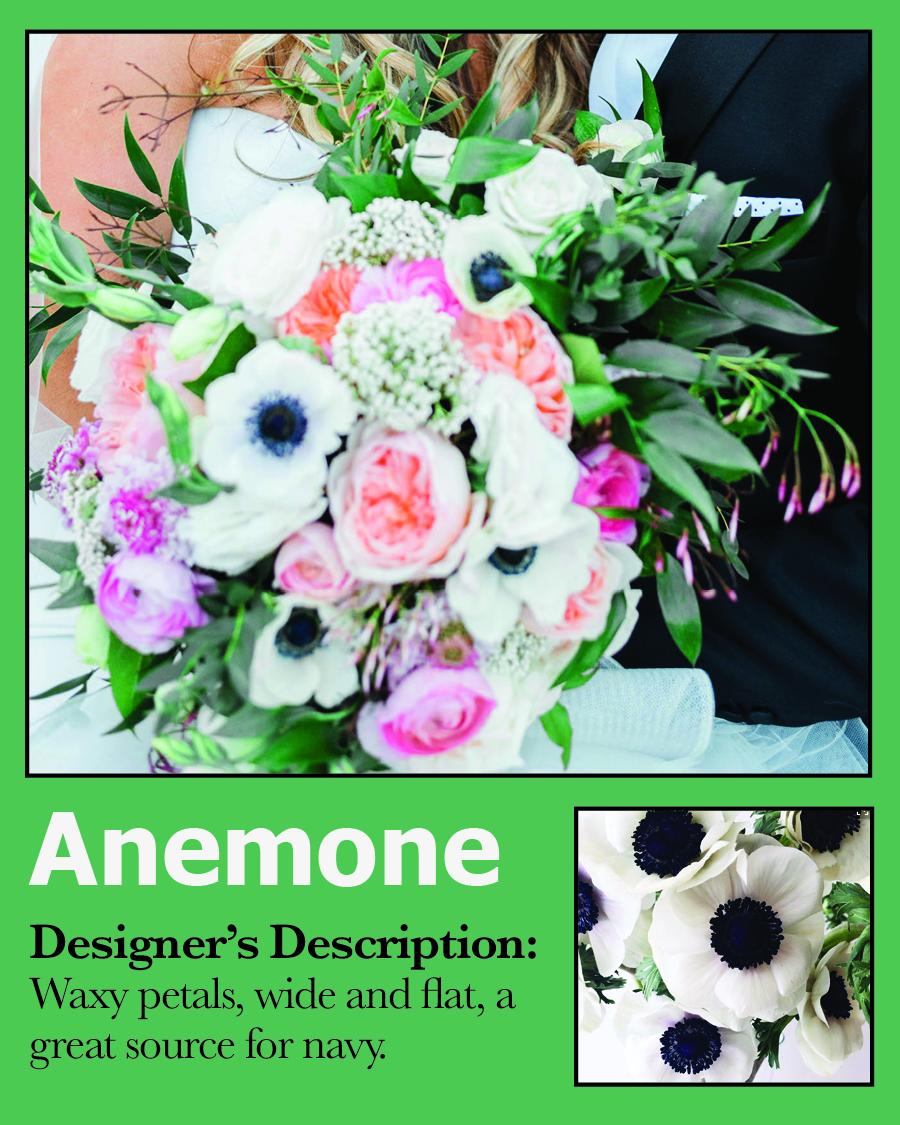 Card-Anemone.jpg