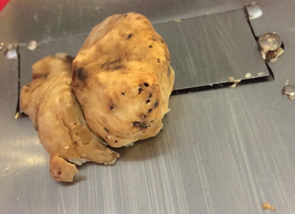 white truffle on the shaver