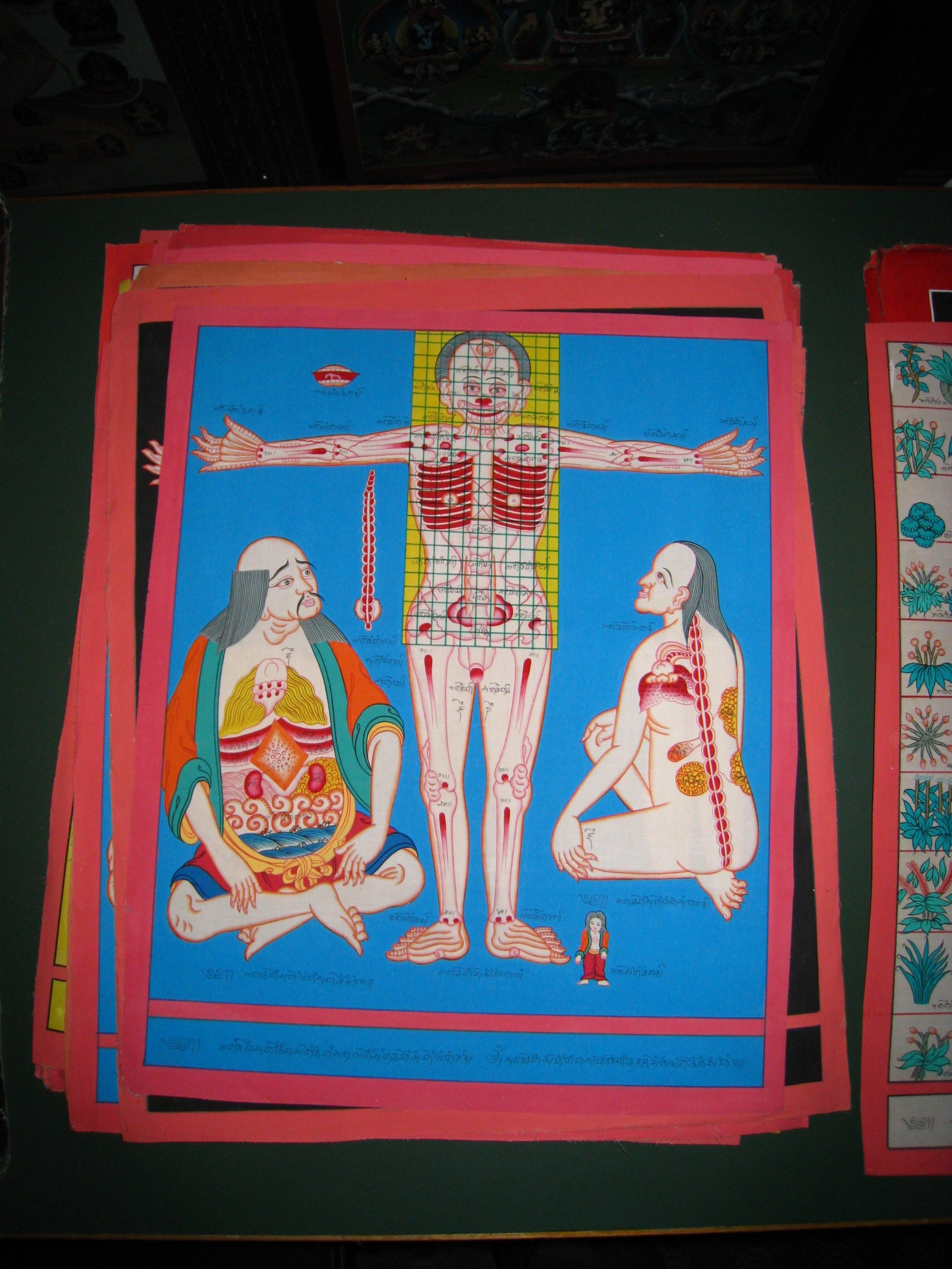 15 anatomy kathmandu.jpg