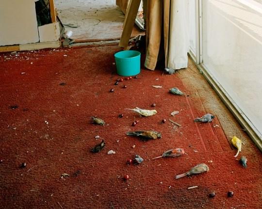 Susan-Worsham-Photography-Dead-Birds.jpg