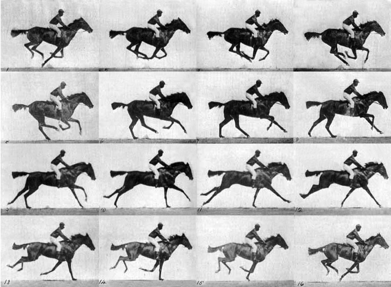 muybridge_horse.png