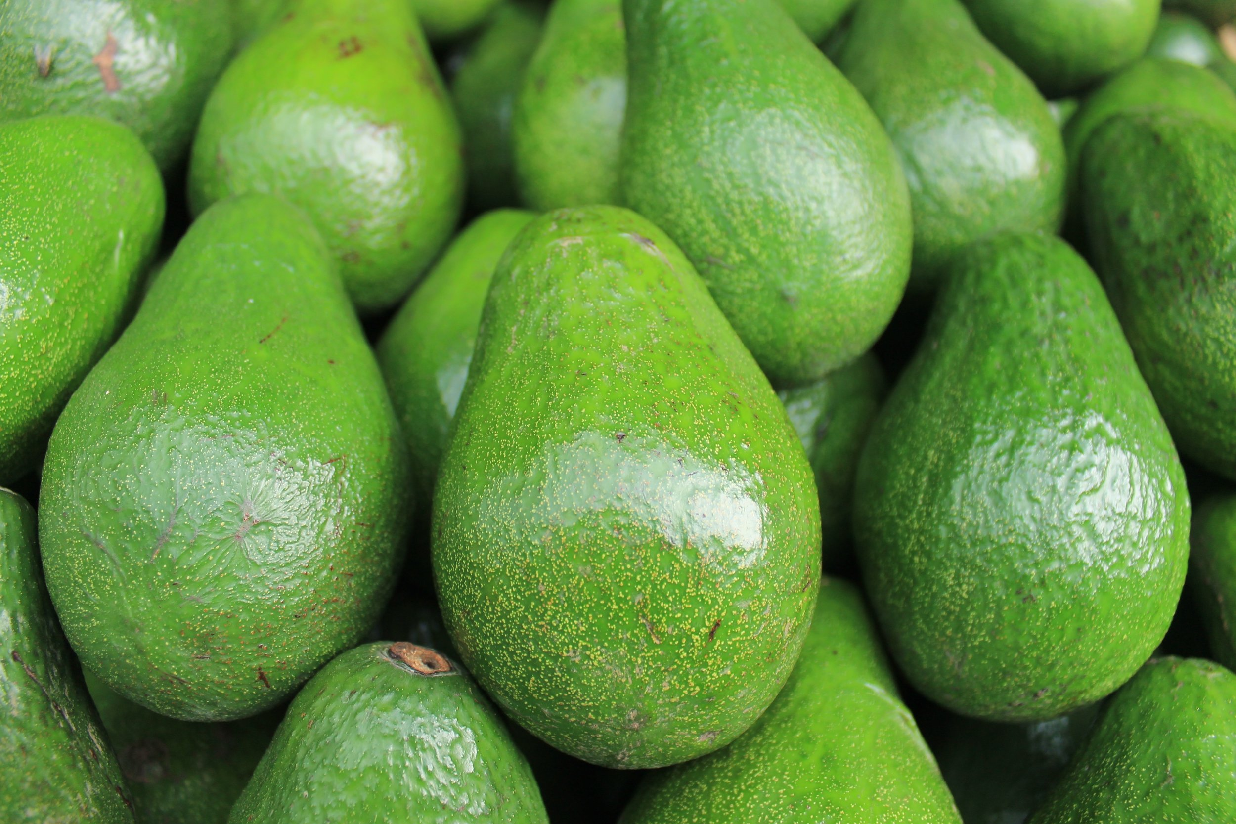 Avocado Ty Phillips Functional Health Coach