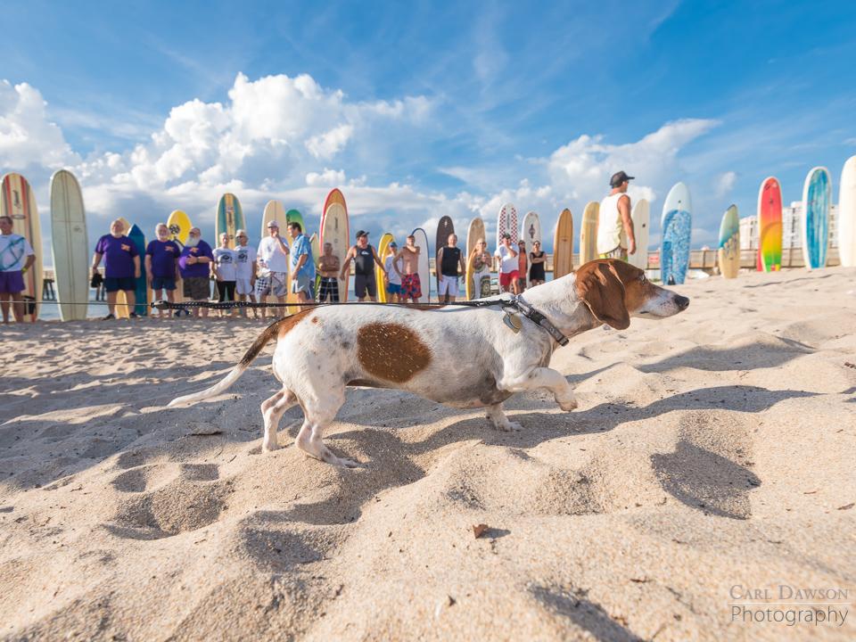 Scott Peterson's dog at his memorial service in Pompano Beach Florida.