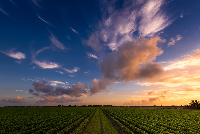 Sunset - Hialeah Farm Land