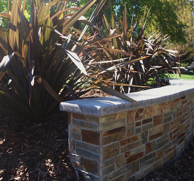 New Zealand Flax make a dramatic statement behind this custom seat wall.  We removed all the lawn in this front yard taking it from boring to bold (and lowered the owner's water bill to boot)! #losethelawn #droughttolerant #gardendesign #landscapedesign