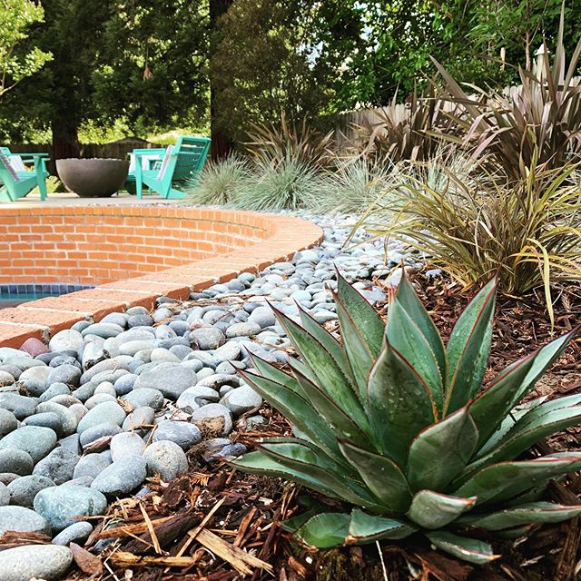 Pool friendly agave and grasses make great poolside companions.  These were planted a little over a year ago and are filling in nicely.  #CFLD #gardendesign #landscapedesign