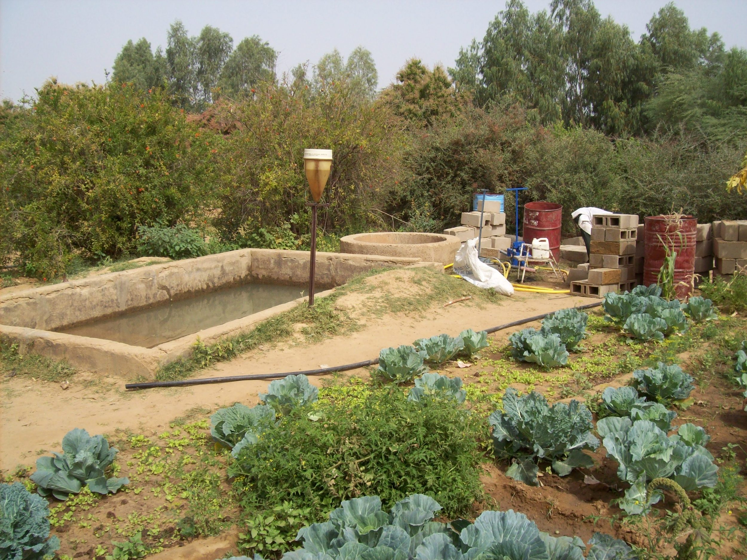 Organic Garden Mar 08 005.jpg