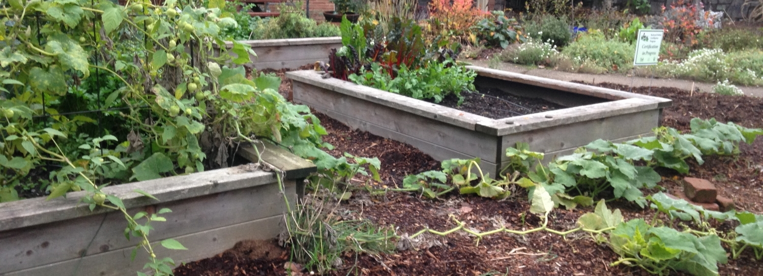 Raised beds constructed with wood. Photo was taken during the winter in a front yard of a house in my neighborhood.